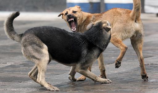 ВНИМАНИЕ! В Суздале с 27 января начался отлов безнадзорных животных
